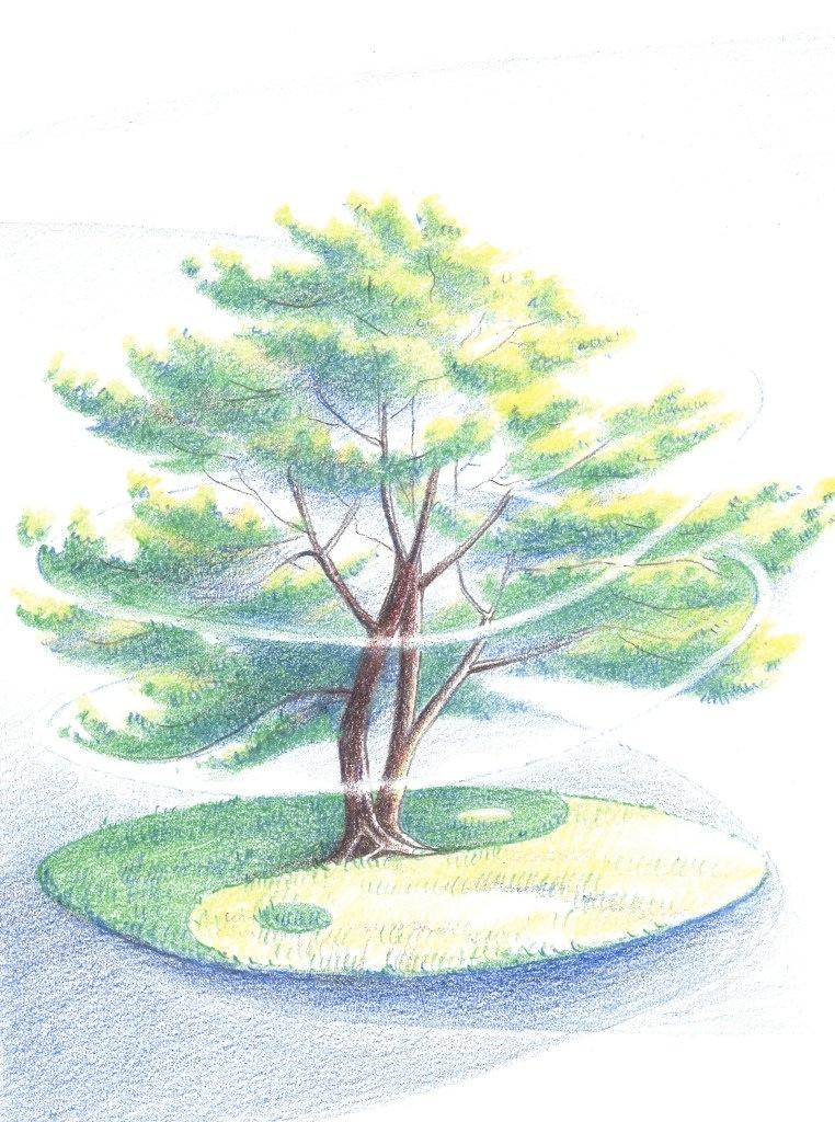 Leven = groei, harmonie en balans