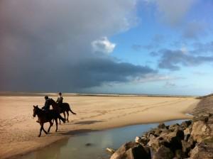 paarden bij zee